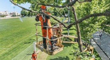 9 Best Arborist Chainsaws (Top Handle) and their Reviews