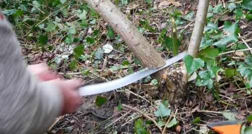 best pruning saw cutting a branch