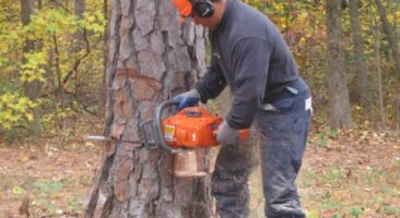 6 Best Chainsaw Under $300 and Reviews