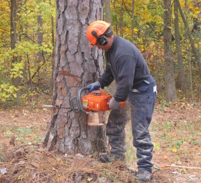 best chainsaw under 300 cutting a tree